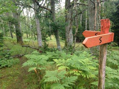 Fin lummig skog på Sörmlandsleden etapp 6