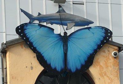 Fjärilshuset hajar fjärilar