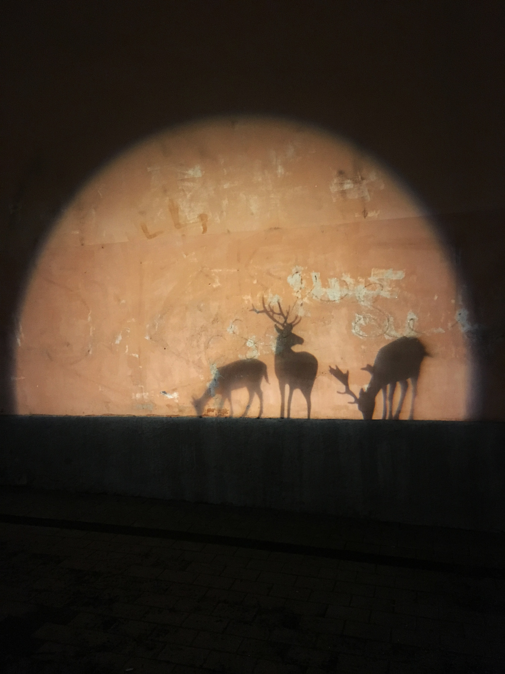 Okänd titel (Hjortar i silhuett på vägg), Okänd konstnär, gatukonst Hjorthagen