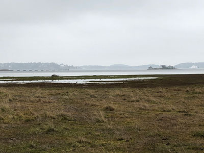 Sankmark i Sandemars naturreservat