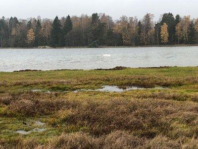 Sandemars naturreservat fåglar