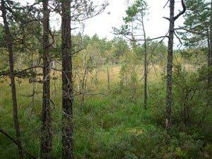 Skogen i Paradiset, Huddinge.