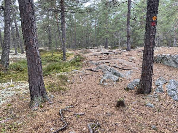 Rötter och sten Bogesund